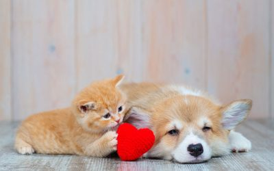 Thinking About Adopting a Dog or Cat?