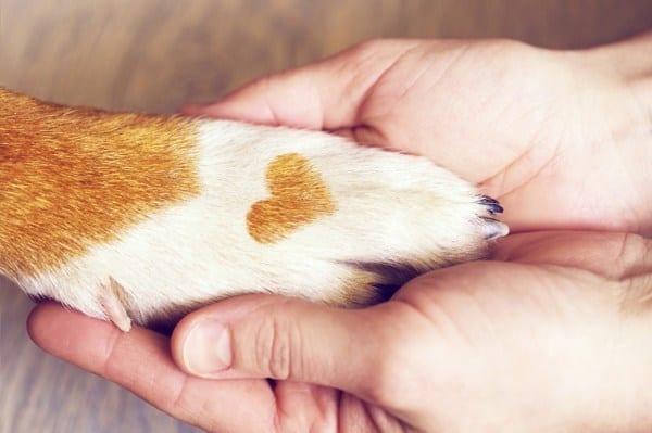 Pet Health - Love Pet Care