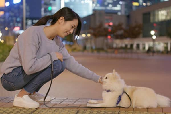 Dog Walking NYC & LA