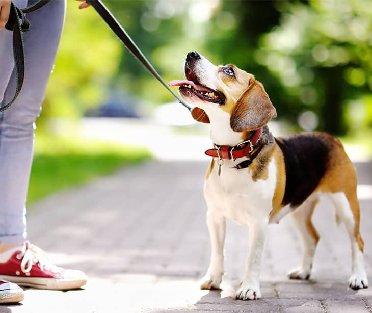 Love Pet Care - Dog Walking