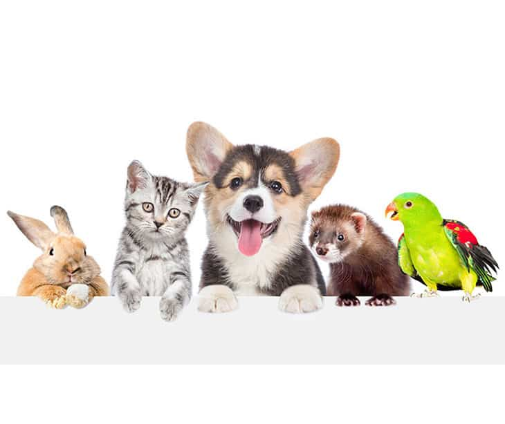 Love Pet Care - Pet Sitting