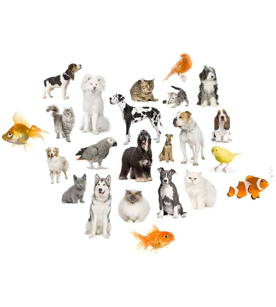 Our Pet Sitting Services