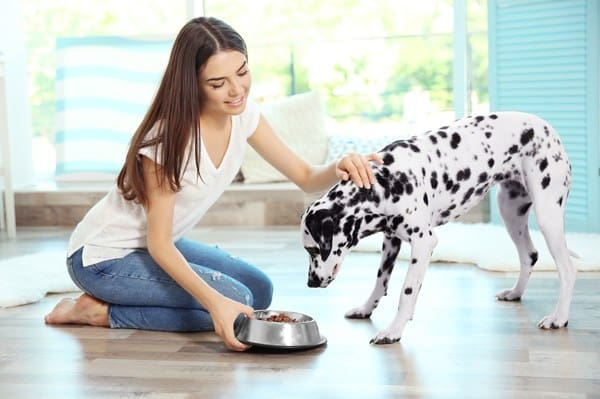 Pet Safety - Love Pet Care