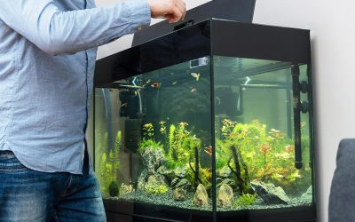 Love Pet Care Will Feed Your Fish While You Are Away